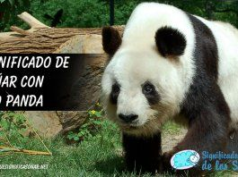 Soñar con oso panda