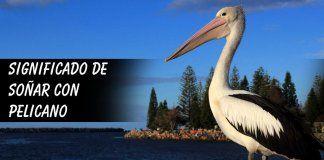 Soñar con un pelicano
