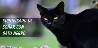 Soñar con gato negro (mala suerte)