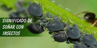 Soñar con insectos